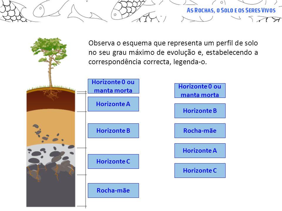 Observa o esquema que representa um perfil de solo no seu grau máximo de evolução e, estabelecendo a correspondência correcta, legenda-o. Horizonte 0