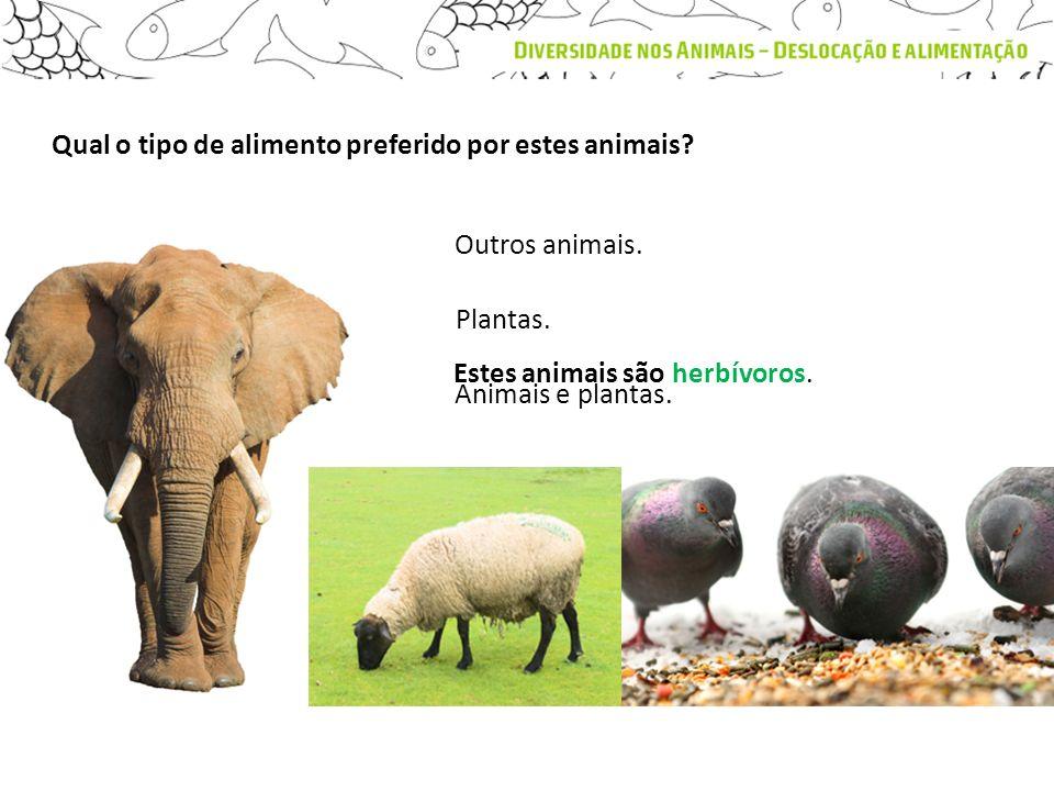 Qual o tipo de alimento preferido por estes animais? Estes animais são herbívoros. Outros animais. Plantas. Animais e plantas.