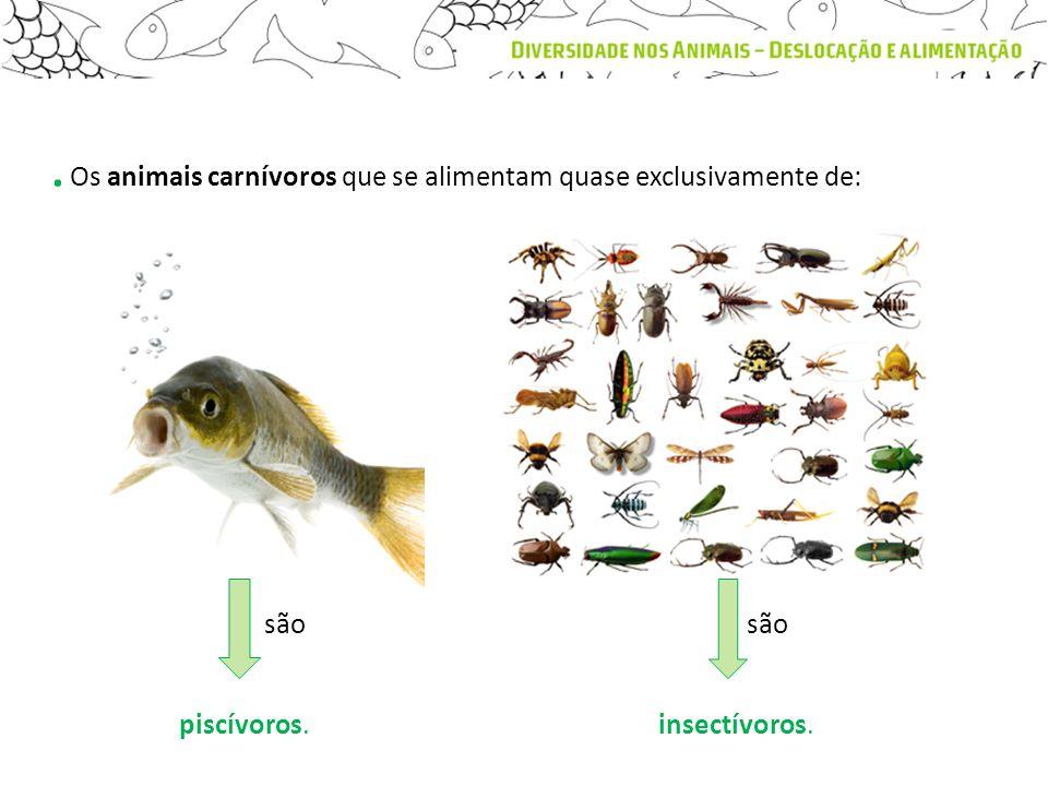 . Os animais carnívoros que se alimentam quase exclusivamente de: piscívoros.insectívoros. são
