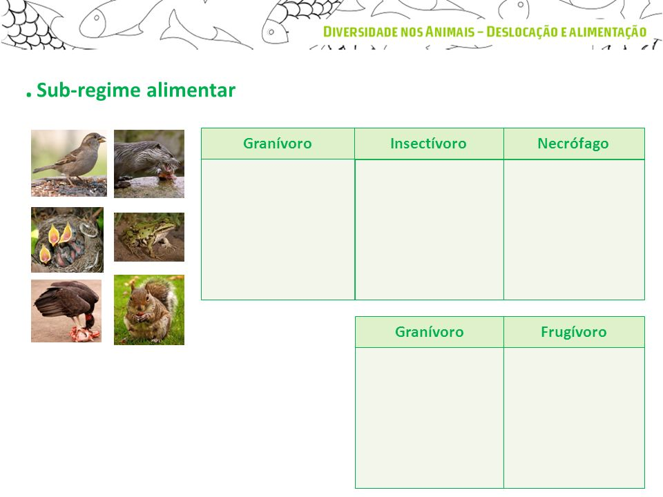 . Sub-regime alimentar GranívoroFrugívoro InsectívoroNecrófago Granívoro