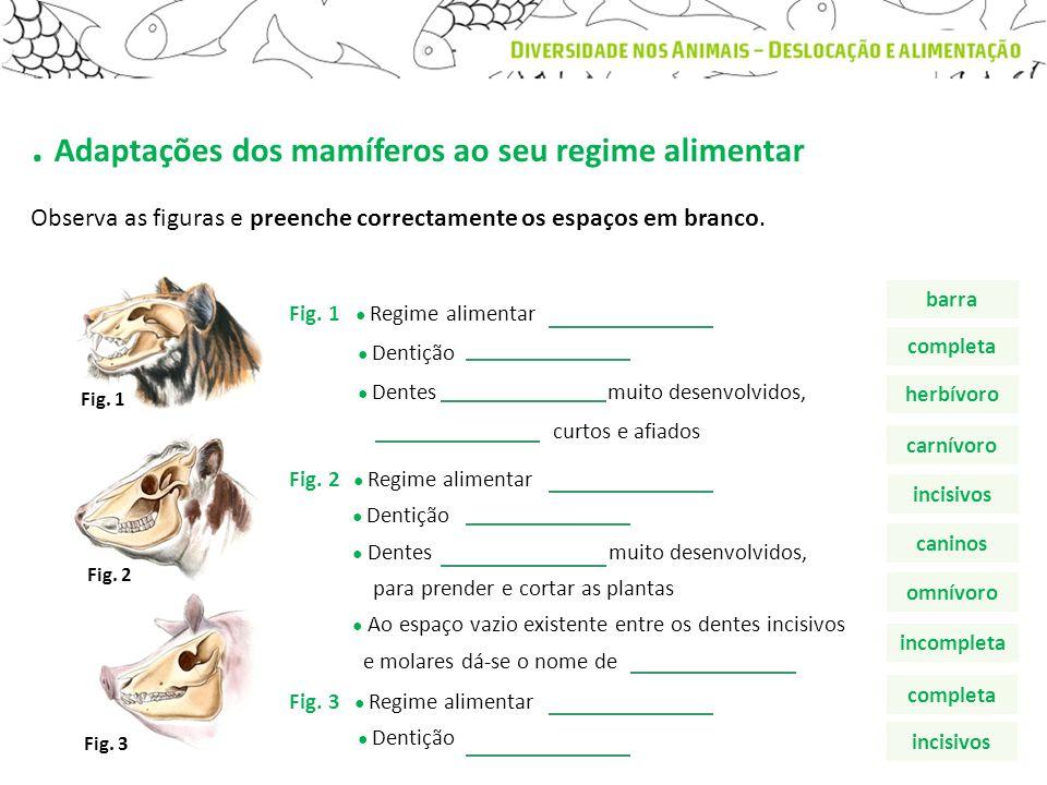 . Adaptações dos mamíferos ao seu regime alimentar Observa as figuras e preenche correctamente os espaços em branco. Fig. 1 Fig. 2 Fig. 3 Fig. 1 Regim