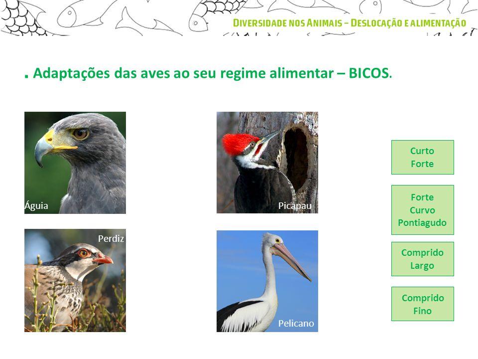 . Adaptações das aves ao seu regime alimentar – BICOS. Águia Perdiz Picapau Forte Curvo Pontiagudo Comprido Largo Comprido Fino Curto Forte Pelicano