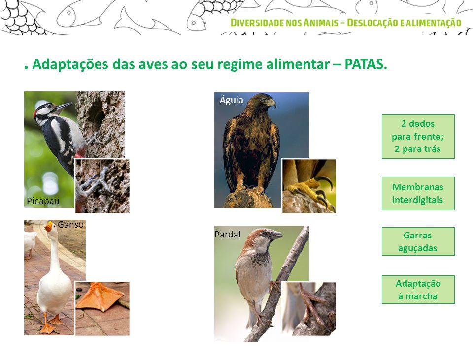 . Adaptações das aves ao seu regime alimentar – PATAS. Garras aguçadas Adaptação à marcha 2 dedos para frente; 2 para trás Membranas interdigitais Pic