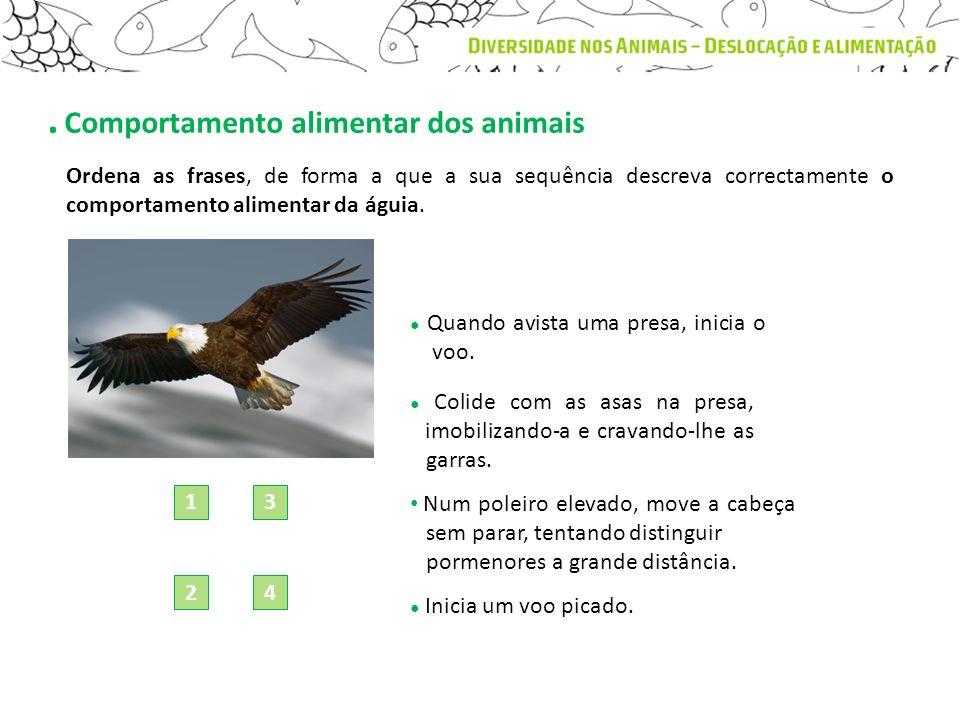 . Comportamento alimentar dos animais Ordena as frases, de forma a que a sua sequência descreva correctamente o comportamento alimentar da águia. Quan