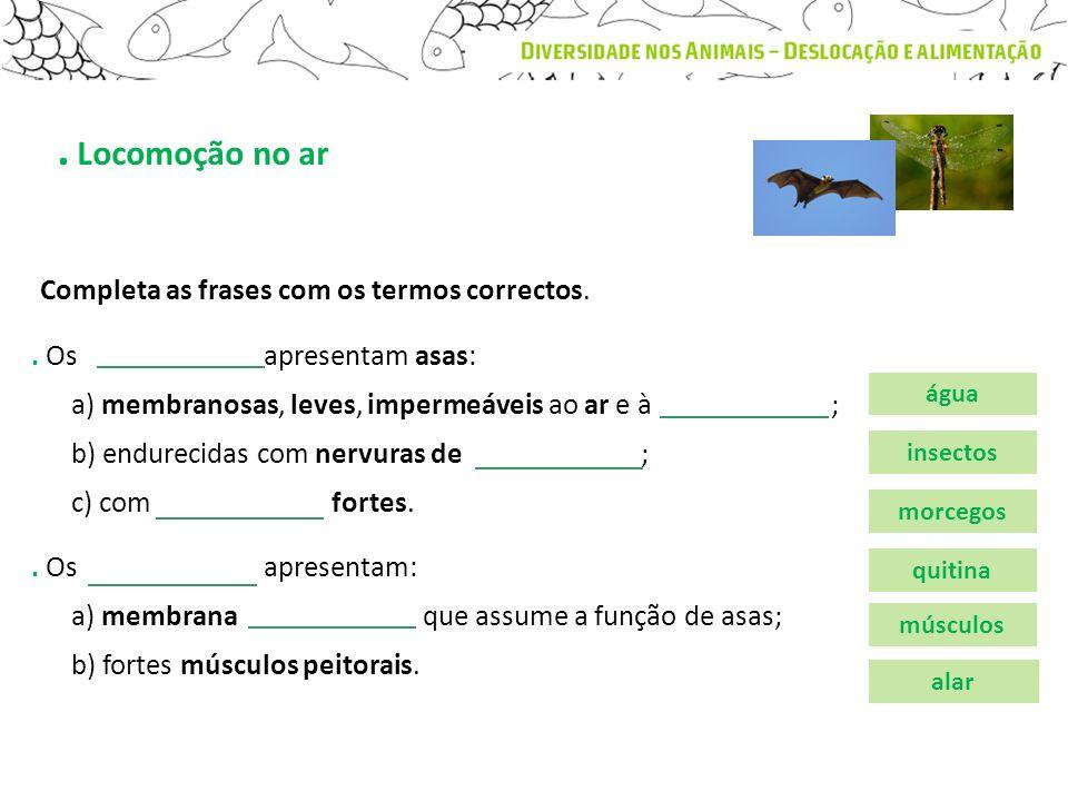 . Os apresentam asas: a) membranosas, leves, impermeáveis ao ar e à ; b) endurecidas com nervuras de ; c) com fortes.. Locomoção no ar. Os apresentam: