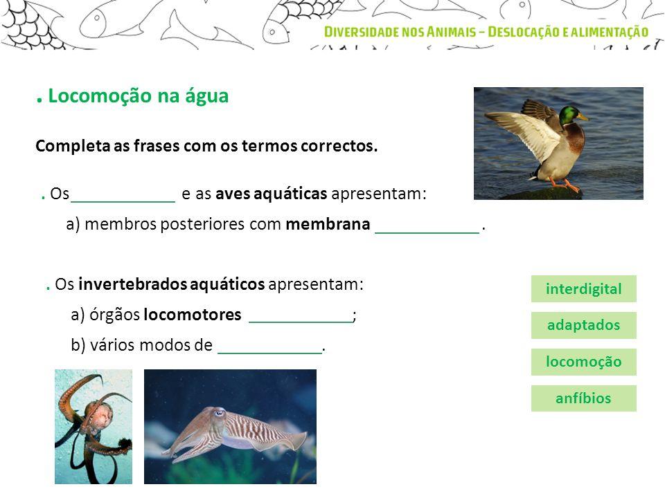 . Locomoção na água. Os e as aves aquáticas apresentam: a) membros posteriores com membrana.. Os invertebrados aquáticos apresentam: a) órgãos locomot