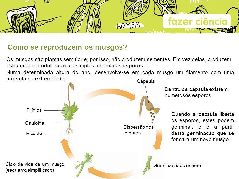 Como se reproduzem os musgos? Os musgos são plantas sem flor e, por isso, não produzem sementes. Em vez delas, produzem estruturas reprodutoras mais s