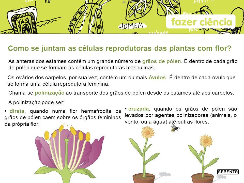 Como se juntam as células reprodutoras das plantas com flor? As anteras dos estames contêm um grande número de grãos de pólen. É dentro de cada grão d