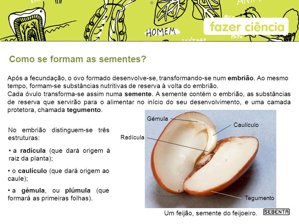 Como se formam as sementes? Após a fecundação, o ovo formado desenvolve-se, transformando-se num embrião. Ao mesmo tempo, formam-se substâncias nutrit