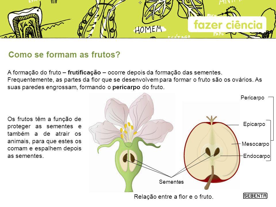 Como se formam as frutos? A formação do fruto – frutificação – ocorre depois da formação das sementes. Frequentemente, as partes da flor que se desenv