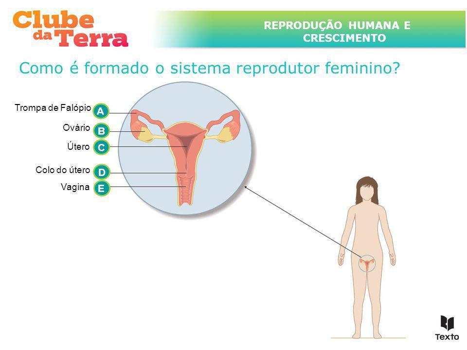 TÍTULO DO ASSUNTO A SER TRATADO NESTE POWERPOINT QUE TEM UM TÍTULO GRANDE REPRODUÇÃO HUMANA E CRESCIMENTO Como é formado o sistema reprodutor feminino