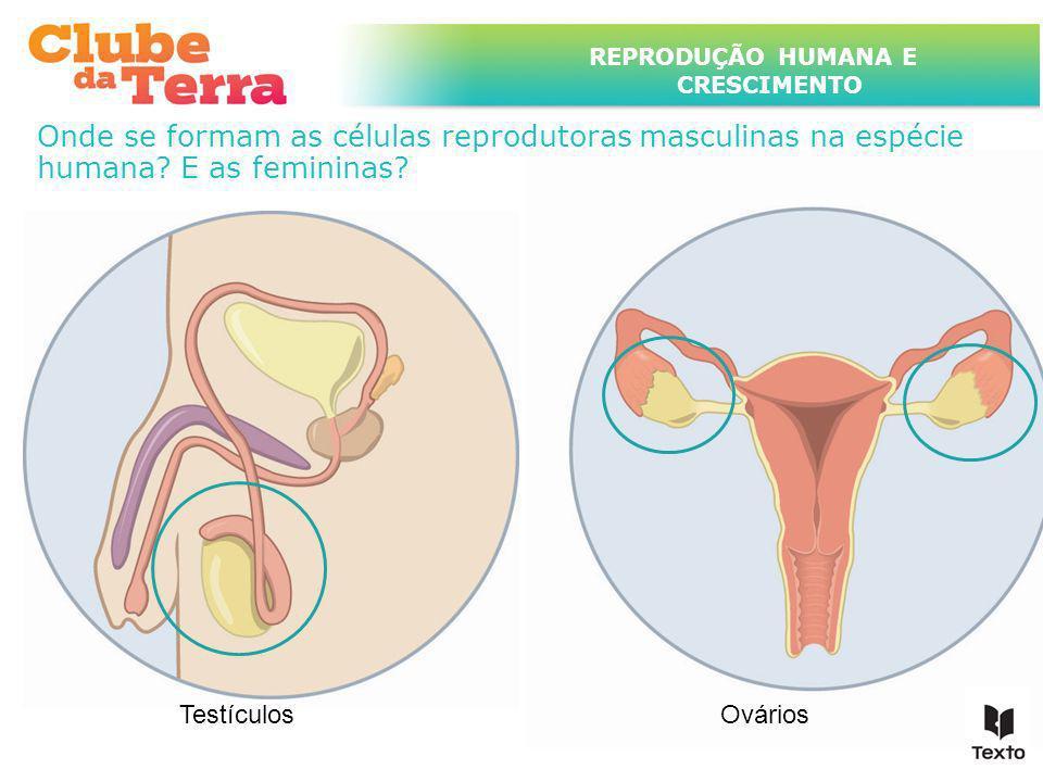 TÍTULO DO ASSUNTO A SER TRATADO NESTE POWERPOINT QUE TEM UM TÍTULO GRANDE REPRODUÇÃO HUMANA E CRESCIMENTO Onde se formam as células reprodutoras mascu