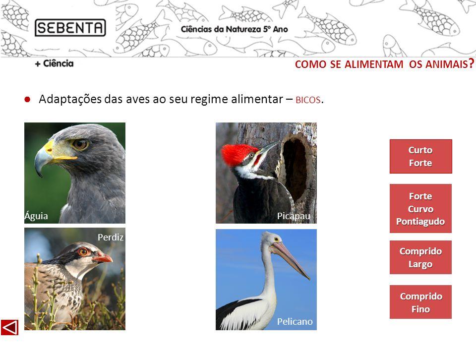 Adaptações das aves ao seu regime alimentar – BICOS. Águia Perdiz Picapau Forte Curvo Pontiagudo Comprido Largo Comprido Fino Curto Forte COMO SE ALIM