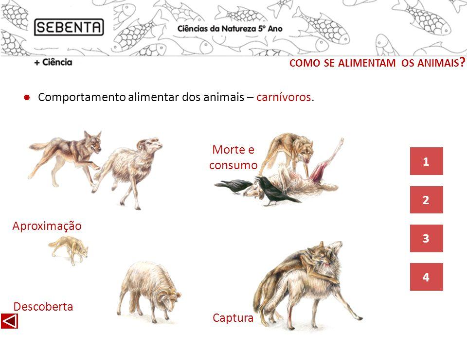 Descoberta Aproximação Captura Comportamento alimentar dos animais – carnívoros. 4 3 2 1 Morte e consumo COMO SE ALIMENTAM OS ANIMAIS ?