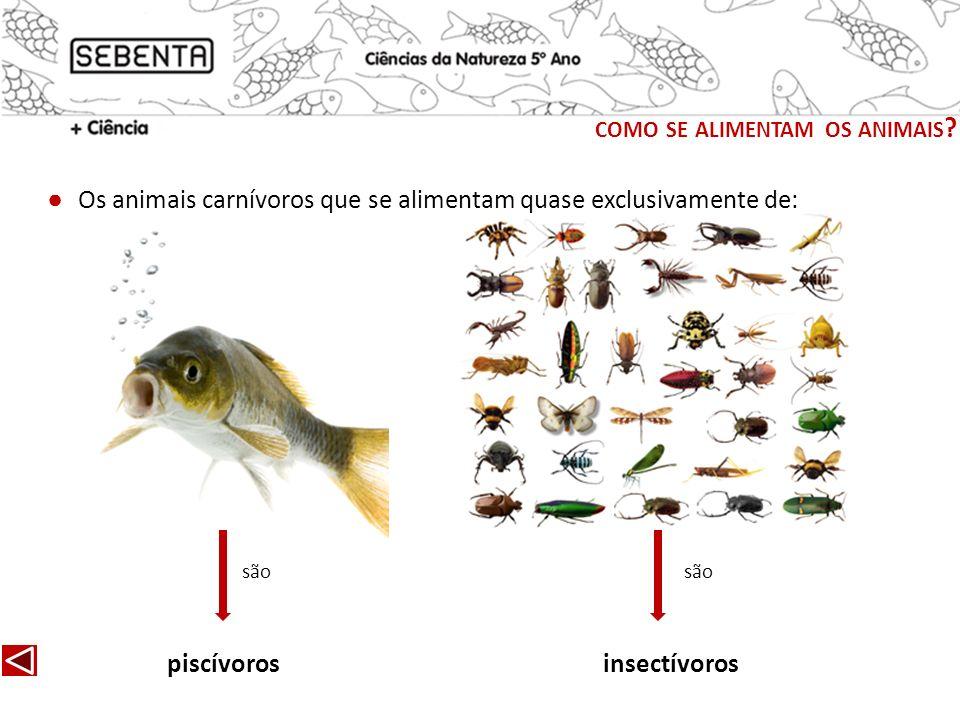 Os animais carnívoros que se alimentam quase exclusivamente de: piscívorosinsectívoros são COMO SE ALIMENTAM OS ANIMAIS ?