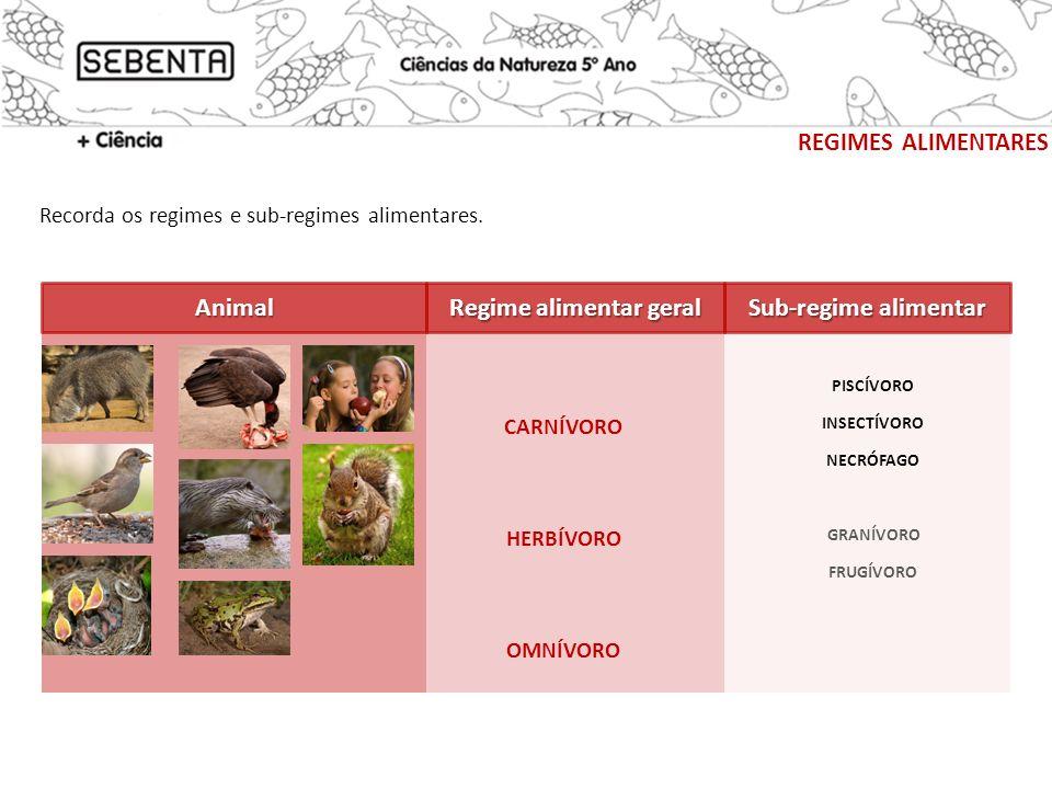 REGIMES ALIMENTARES CarnívoroHerbívoroOmnívoro Regime alimentar