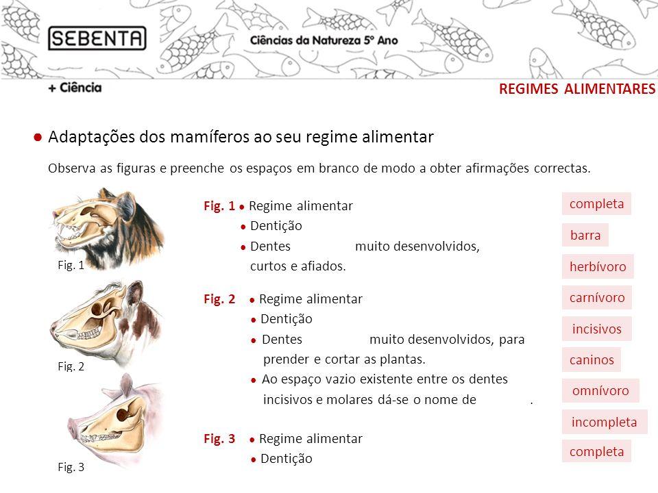 completa Adaptações dos mamíferos ao seu regime alimentar REGIMES ALIMENTARES Observa as figuras e preenche os espaços em branco de modo a obter afirm