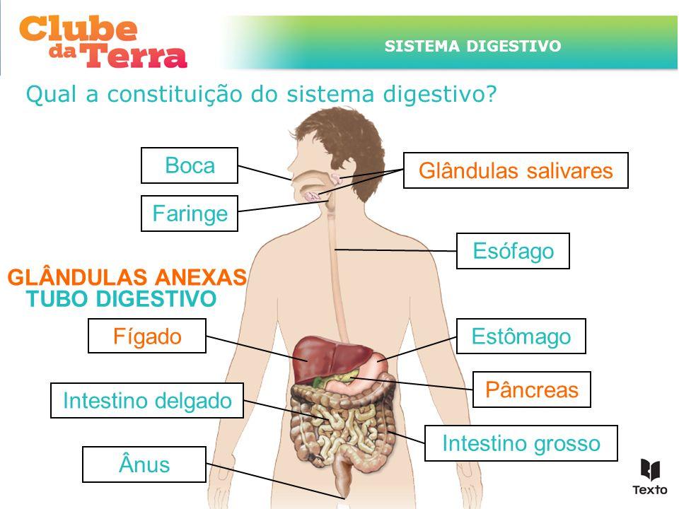 TÍTULO DO ASSUNTO A SER TRATADO NESTE POWERPOINT QUE TEM UM TÍTULO GRANDE Qual a constituição do sistema digestivo? TUBO DIGESTIVO Boca Faringe Esófag