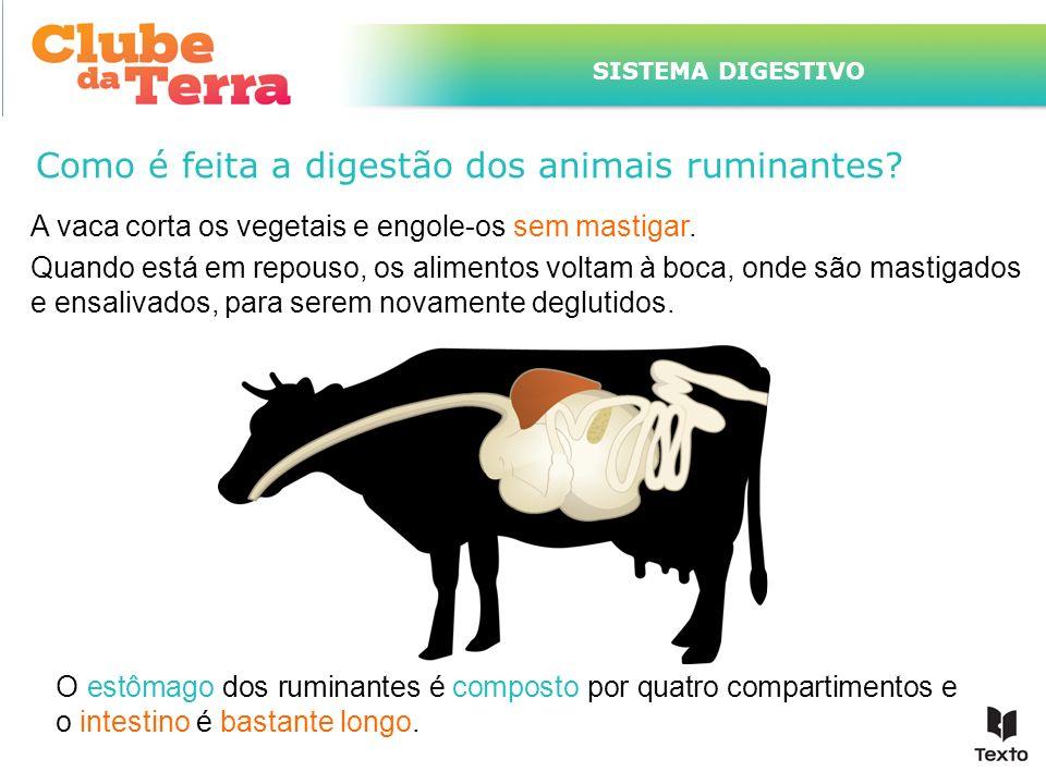 TÍTULO DO ASSUNTO A SER TRATADO NESTE POWERPOINT QUE TEM UM TÍTULO GRANDE SISTEMA DIGESTIVO Como é feita a digestão dos animais ruminantes? A vaca cor