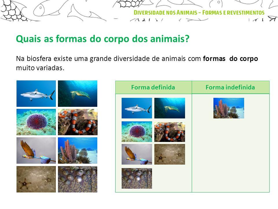 Quais as formas do corpo dos animais? Na biosfera existe uma grande diversidade de animais com formas do corpo muito variadas. Forma definidaForma ind
