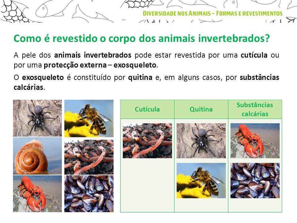 Como é revestido o corpo dos animais invertebrados? A pele dos animais invertebrados pode estar revestida por uma cutícula ou por uma protecção extern