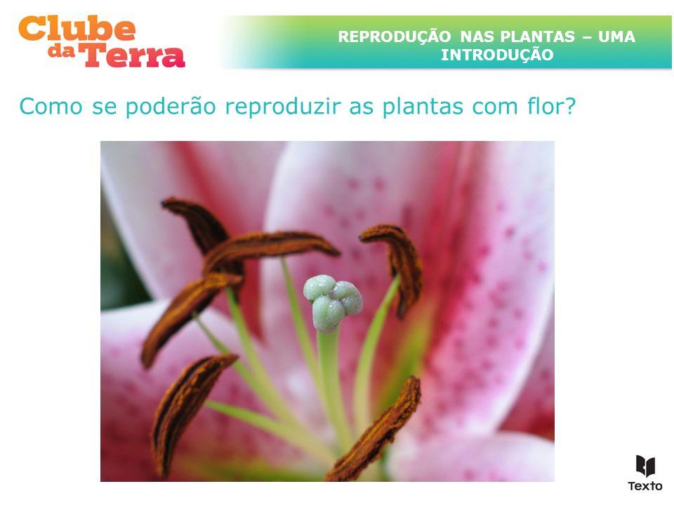 TÍTULO DO ASSUNTO A SER TRATADO NESTE POWERPOINT QUE TEM UM TÍTULO GRANDE Quais serão os órgãos reprodutores das plantas com flor.