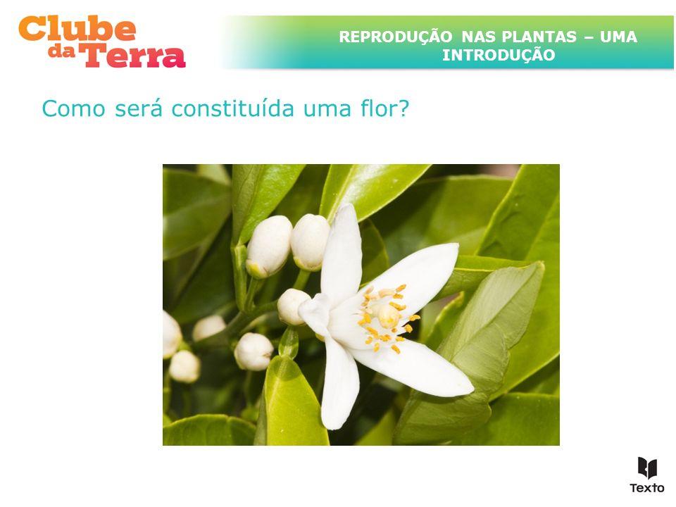 TÍTULO DO ASSUNTO A SER TRATADO NESTE POWERPOINT QUE TEM UM TÍTULO GRANDE Como será constituída uma flor? REPRODUÇÃO NAS PLANTAS – UMA INTRODUÇÃO