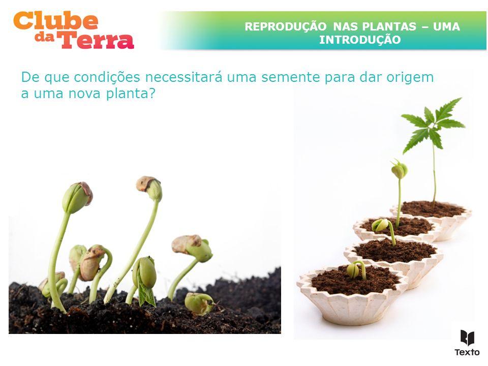TÍTULO DO ASSUNTO A SER TRATADO NESTE POWERPOINT QUE TEM UM TÍTULO GRANDE De que condições necessitará uma semente para dar origem a uma nova planta?