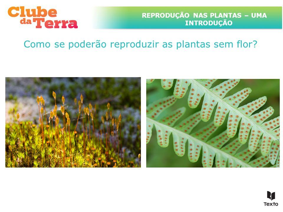 TÍTULO DO ASSUNTO A SER TRATADO NESTE POWERPOINT QUE TEM UM TÍTULO GRANDE Como se poderão reproduzir as plantas sem flor? REPRODUÇÃO NAS PLANTAS – UMA