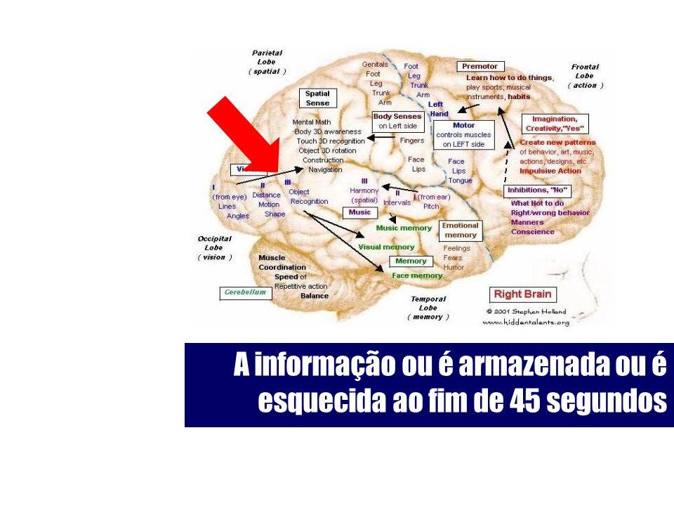 A informação ou é armazenada ou é esquecida ao fim de 45 segundos