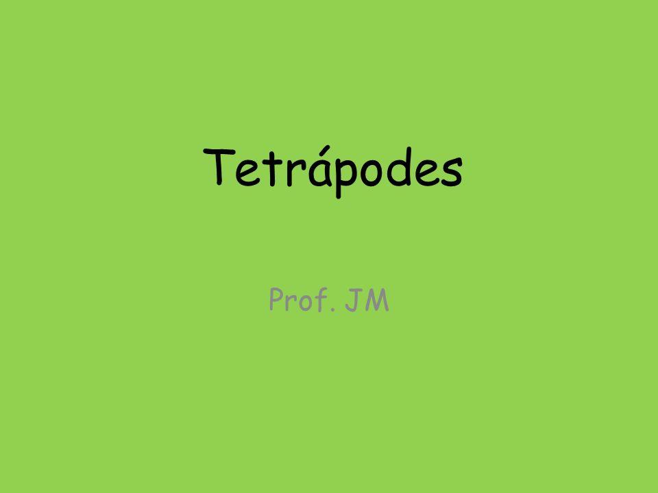 Tetrápodes Prof. JM