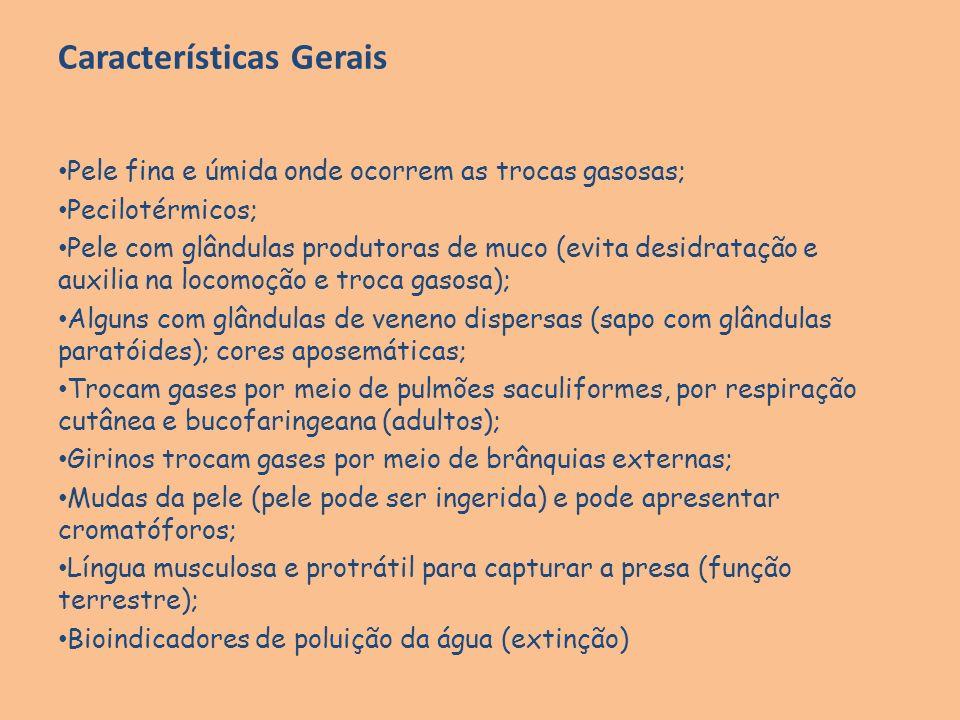 Características Gerais Pele fina e úmida onde ocorrem as trocas gasosas; Pecilotérmicos; Pele com glândulas produtoras de muco (evita desidratação e a