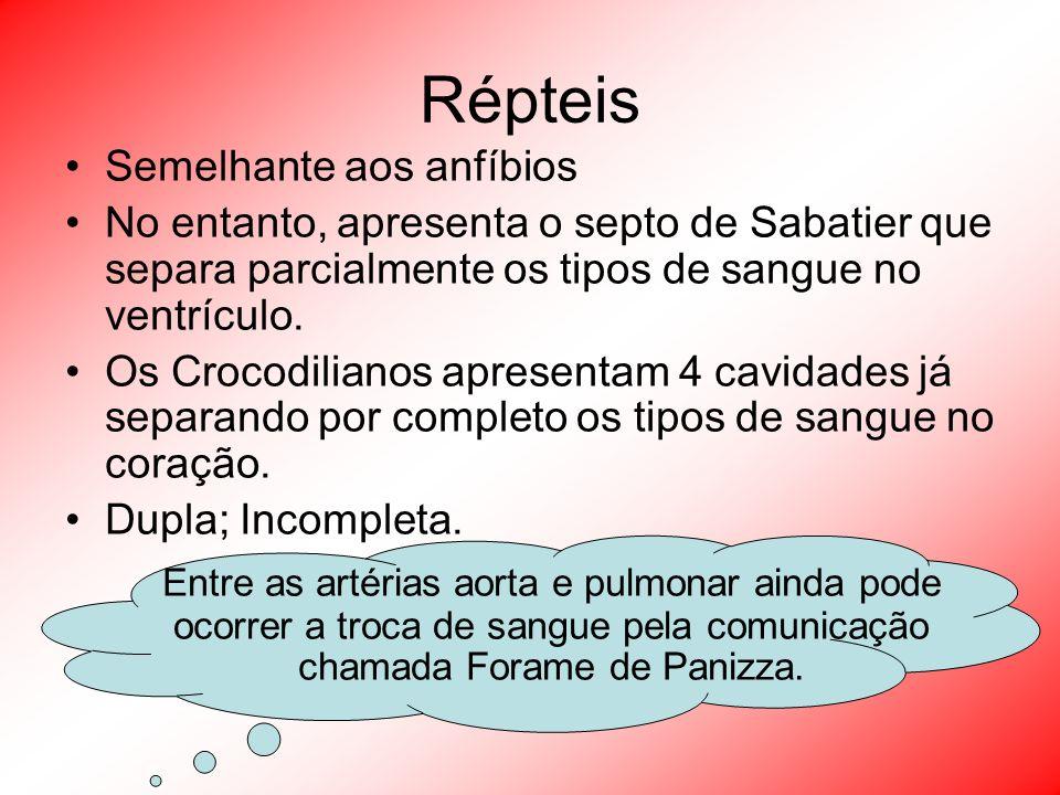 Répteis Semelhante aos anfíbios No entanto, apresenta o septo de Sabatier que separa parcialmente os tipos de sangue no ventrículo. Os Crocodilianos a