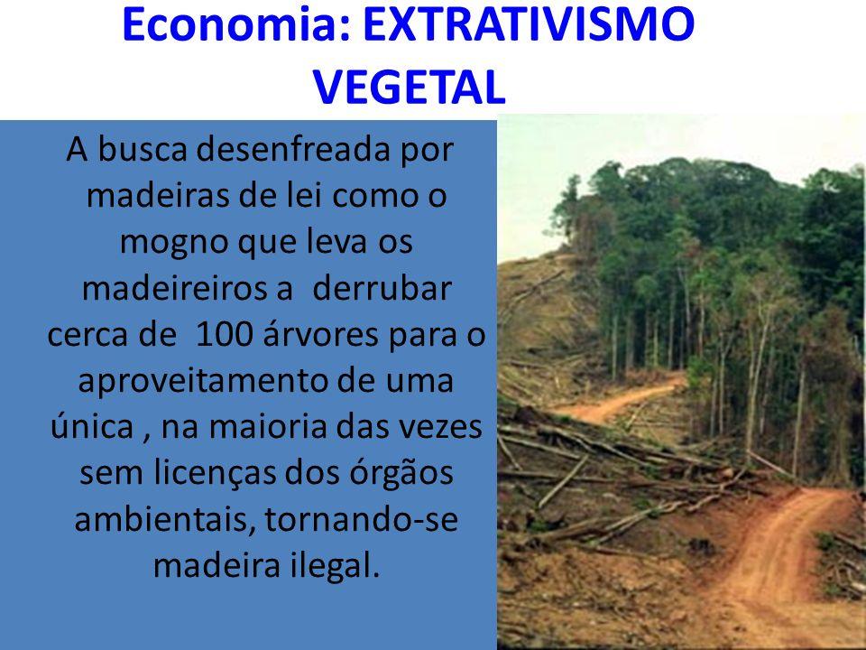 Economia: EXTRATIVISMO VEGETAL A busca desenfreada por madeiras de lei como o mogno que leva os madeireiros a derrubar cerca de 100 árvores para o aproveitamento de uma única, na maioria das vezes sem licenças dos órgãos ambientais, tornando-se madeira ilegal.
