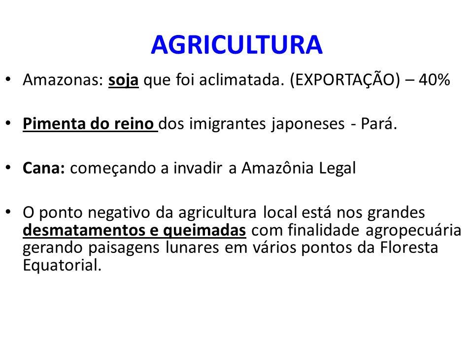 AGRICULTURA Amazonas: soja que foi aclimatada.