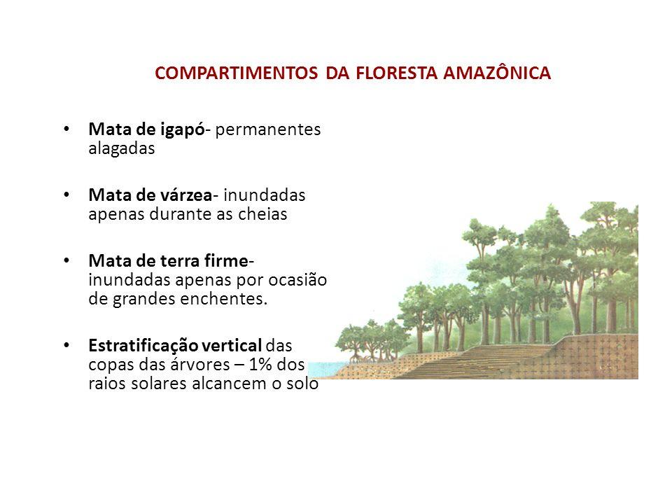 OS POVOS DA AMAZÔNIA A Amazônia é retalho de raças e de povos.