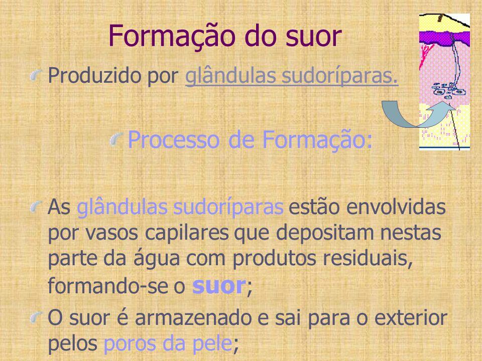 Formação do suor Produzido por glândulas sudoríparas. Processo de Formação: As glândulas sudoríparas estão envolvidas por vasos capilares que deposita