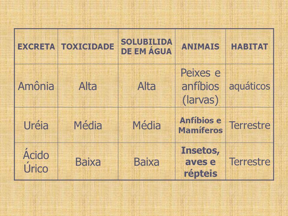 Constituintes Anormais da Urina Albumina -Albumina: (albuminúria) é muito grande para ser filtrado.