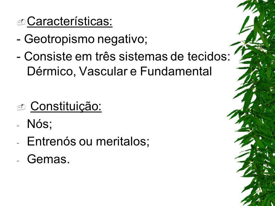 Características: - Geotropismo negativo; - Consiste em três sistemas de tecidos: Dérmico, Vascular e Fundamental Constituição: - Nós; - Entrenós ou me