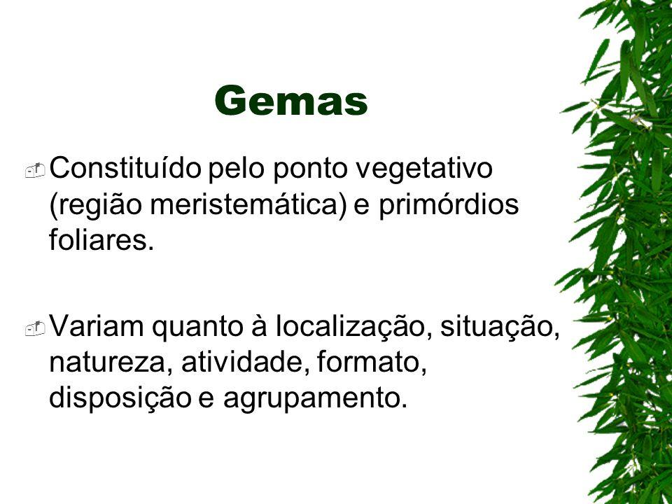 Gemas Constituído pelo ponto vegetativo (região meristemática) e primórdios foliares. Variam quanto à localização, situação, natureza, atividade, form