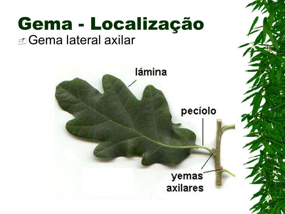 Gema - Localização Gema lateral axilar