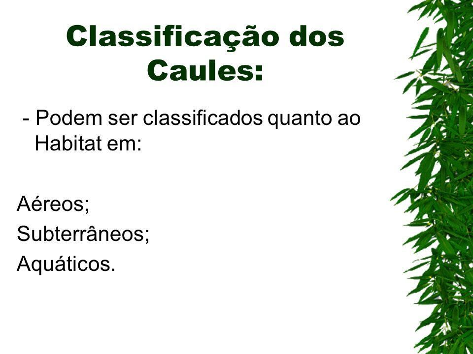 Classificação dos Caules: - Podem ser classificados quanto ao Habitat em: Aéreos; Subterrâneos; Aquáticos.