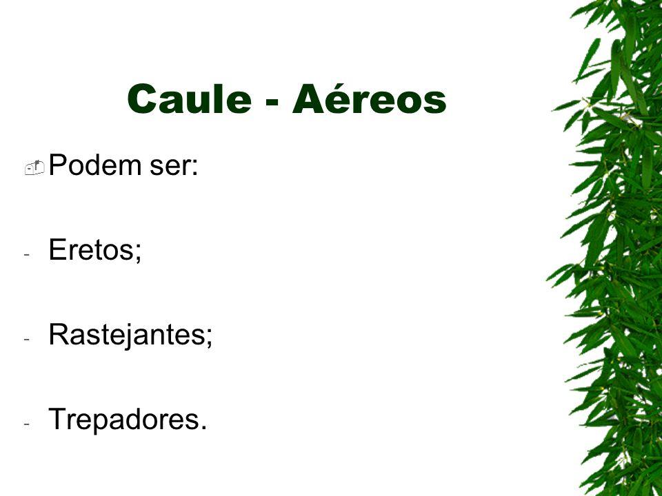 Caule - Aéreos Podem ser: - Eretos; - Rastejantes; - Trepadores.