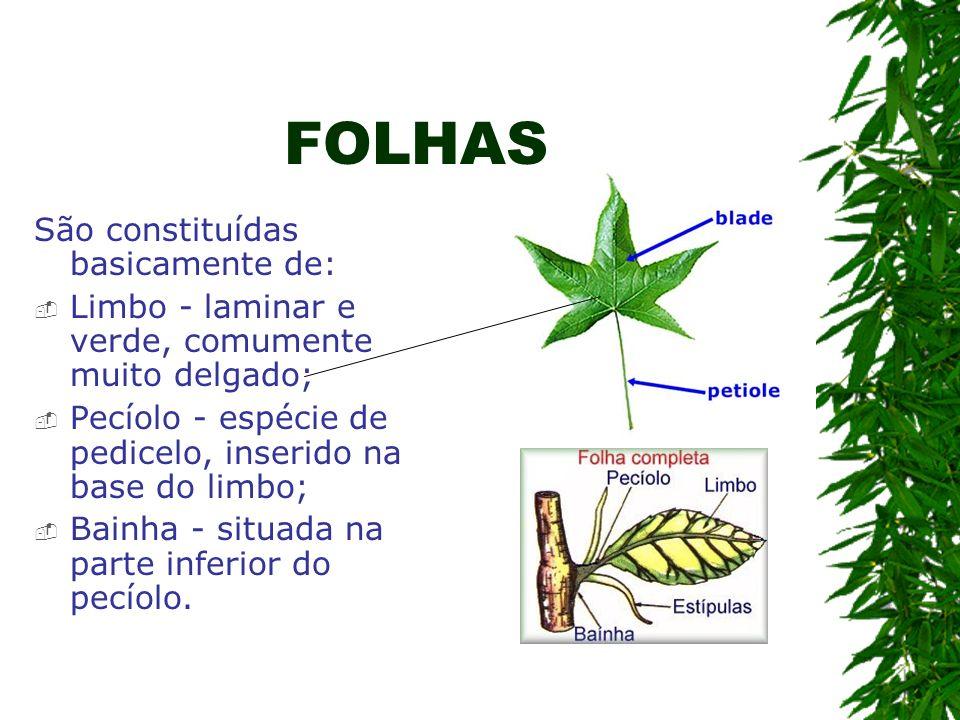 FOLHAS São constituídas basicamente de: Limbo - laminar e verde, comumente muito delgado; Pecíolo - espécie de pedicelo, inserido na base do limbo; Ba