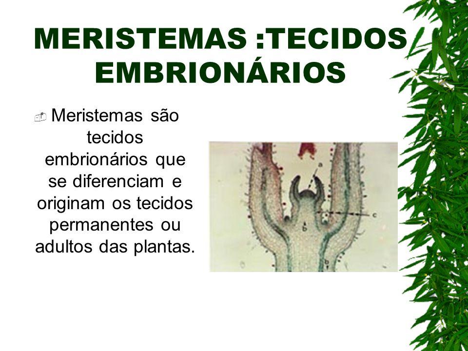 MERISTEMAS :TECIDOS EMBRIONÁRIOS Meristemas são tecidos embrionários que se diferenciam e originam os tecidos permanentes ou adultos das plantas.