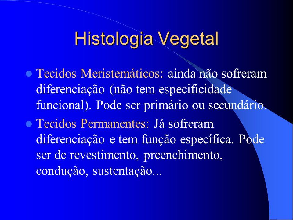 Histologia Vegetal Tecidos Meristemáticos: ainda não sofreram diferenciação (não tem especificidade funcional). Pode ser primário ou secundário. Tecid