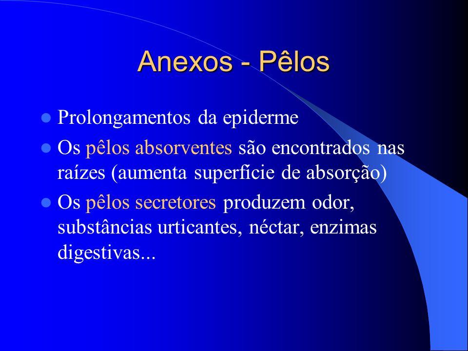 Anexos - Pêlos Prolongamentos da epiderme Os pêlos absorventes são encontrados nas raízes (aumenta superfície de absorção) Os pêlos secretores produze