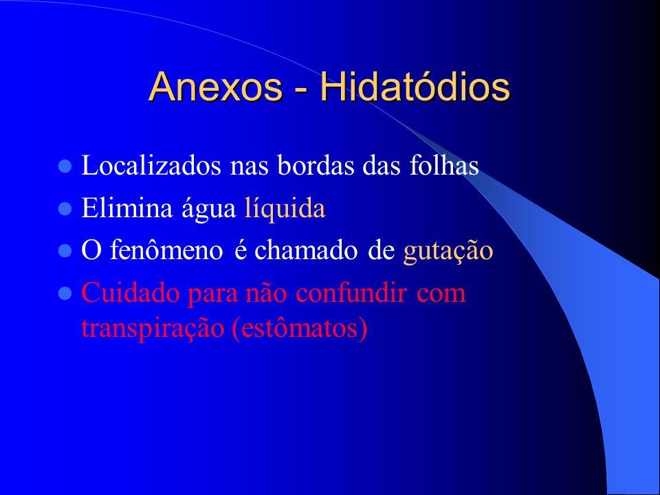 Anexos - Hidatódios Localizados nas bordas das folhas Elimina água líquida O fenômeno é chamado de gutação Cuidado para não confundir com transpiração