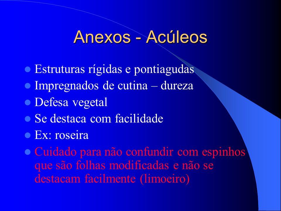 Anexos - Acúleos Estruturas rígidas e pontiagudas Impregnados de cutina – dureza Defesa vegetal Se destaca com facilidade Ex: roseira Cuidado para não