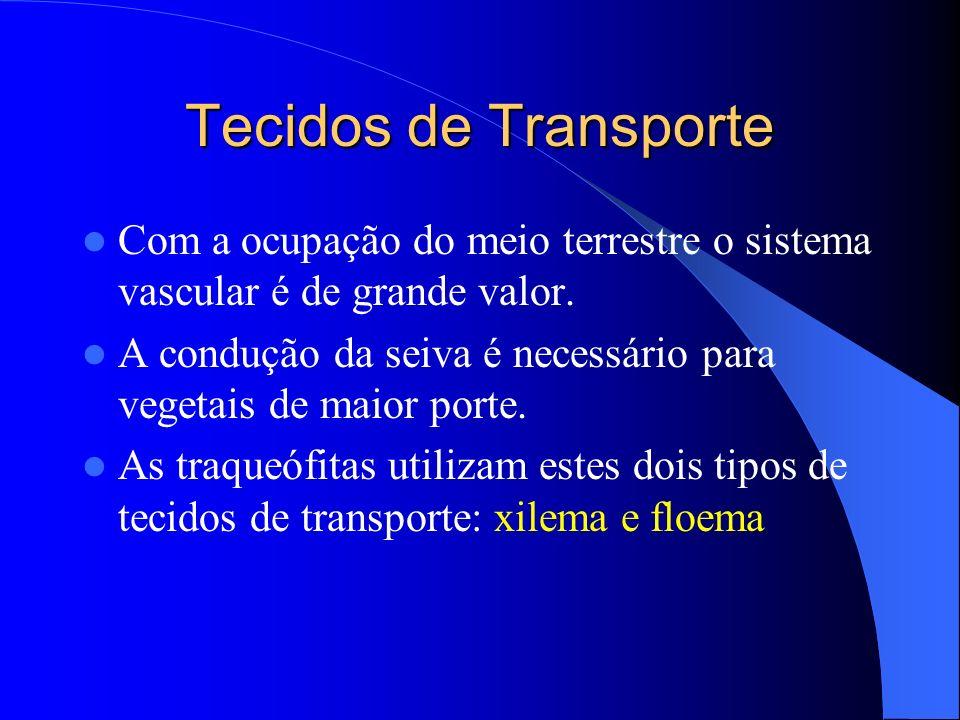Tecidos de Transporte Com a ocupação do meio terrestre o sistema vascular é de grande valor. A condução da seiva é necessário para vegetais de maior p